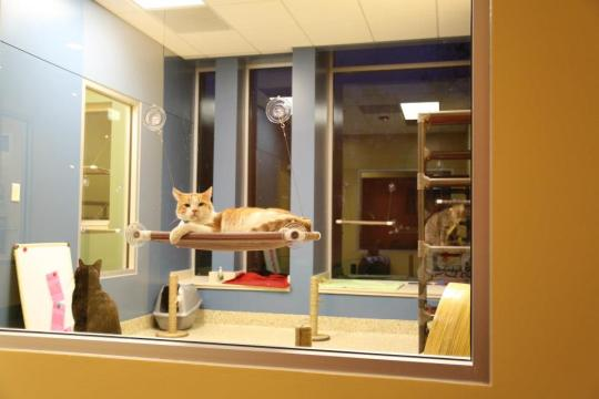 Chillin' Feline Style at Great Plains SPCA