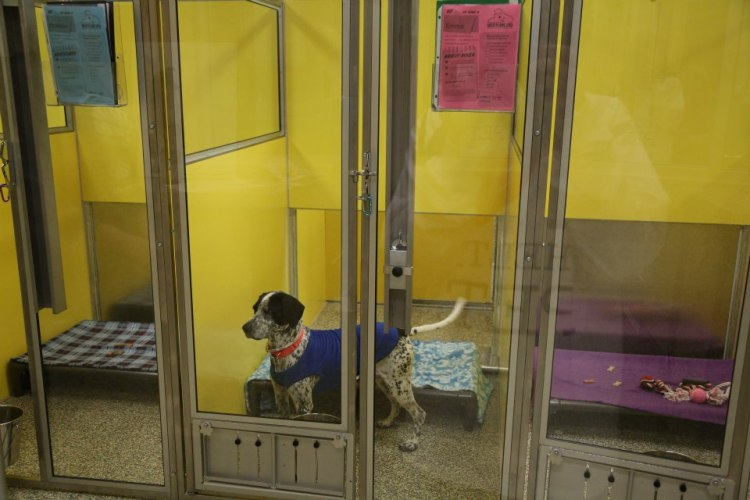 Dog Waiting for a New Home at Great Plains New Facility